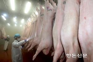 삼겹살데이 끝나며 널뛰는 돼지고기값