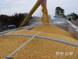 축산농가, 환율 상승으로 사료가격 추이 촉각