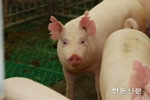 양돈장 등 38곳 악취 신고시설 지정 '첫 취소'